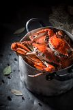 Ingrediënten voor eigengemaakte krab met pimentbes en laurierblad Royalty-vrije Stock Foto