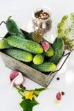Ingrediënten voor het inleggen van komkommers Stock Fotografie