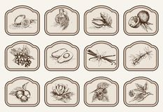 Ingrediënten voor natuurlijke schoonheidsmiddelen Stock Fotografie