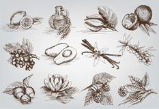 Ingrediënten voor natuurlijke schoonheidsmiddelen Royalty-vrije Stock Foto's