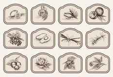 Ingredienser för naturliga skönhetsmedel Arkivbild