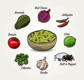 Ingredienser för vektoravokadoGuacamole stock illustrationer