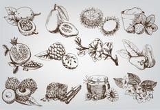 Ingredienser för naturliga skönhetsmedel Royaltyfri Fotografi