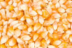 Ingredient of pop corn Stock Image
