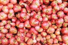 Ingredient of Thai foods Stock Images