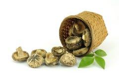 Ingrediente chinês, cogumelo secado na cesta Imagem de Stock
