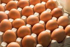 Ingrediente de alimento fresco do ovo no pacote Imagens de Stock Royalty Free