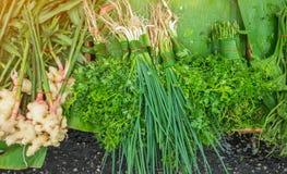 Ingrediente di erbe dell'aroma dell'alimento Fotografia Stock Libera da Diritti