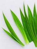 Ingrediente erval tailandês para o pa tailandês da aromaterapia da sobremesa e dos termas Fotografia de Stock