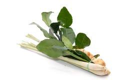 Ingrediente per lo zenzero di yum di Tom, galanga, citronella, KAF immagini stock libere da diritti