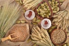 Ingredientes da cerveja Imagens de Stock
