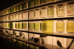 Ingredientes de alimento tropicais indicados no Museu Nacional de Singapura Foto de Stock Royalty Free
