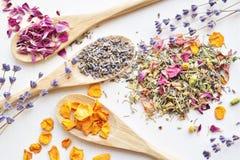 Ingredientes de la infusión de hierbas Fotografía de archivo libre de regalías