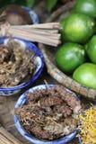 Ingredientes del té, hierbas Fotos de archivo