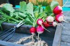 Ingredientes frescos saudáveis da salada indicados em placas de madeira envelhecidas velhas com diversas variedades de alface fro imagens de stock