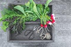 Ingredientes frescos saudáveis da salada indicados em placas de madeira envelhecidas velhas com diversas variedades de alface fro imagens de stock royalty free