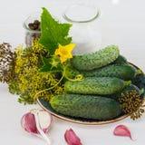 Ingredientes para los pepinos de conserva en vinagre Foto de archivo libre de regalías