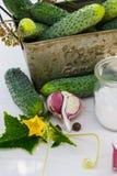 Ingredientes para los pepinos de conserva en vinagre Imagen de archivo libre de regalías