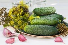 Ingredientes para los pepinos de conserva en vinagre, horizontales Fotos de archivo libres de regalías