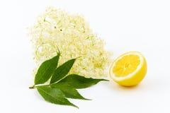 Ingredientes saudáveis Imagens de Stock Royalty Free