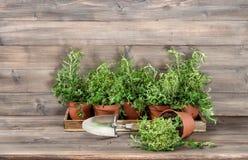 Ingredienti alimentari di legno del fondo delle piante aromatiche Immagine Stock