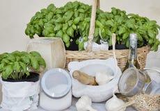 Ingredienti del pesto ligure genuino del basilico Fotografia Stock Libera da Diritti