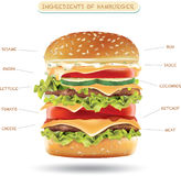 Ingredienti dell'hamburger Infographics di vettore Fotografia Stock