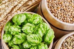 Ingredienti della birra in barilotti Fotografia Stock