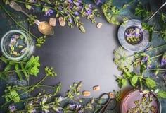 Ingredienti della tisana con le vari erbe e fiori freschi, tazza di tè e strumenti sul fondo nero della lavagna immagini stock libere da diritti