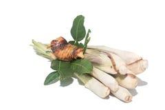 Ingredienti di alimento tailandesi Fotografia Stock