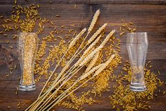 Ingredients for beer. Malting barley in beer glass on wooden background top view.  Royalty Free Stock Photography