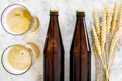 Ingredients for beer. Malting barley near glasses of beer on grey background top view.  Stock Photo