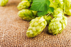 Ingredients for beer production Royalty Free Stock Photography