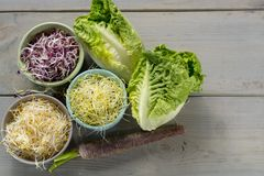 Ingredients for healthy salad. Raw fresh young organic sprouts o. Raw fresh young organic sprouts of leek, alfalfa, red reddish in bowls, carrot and green Stock Photography