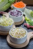 Ingredients for healthy salad. Raw fresh young organic sprouts o. Raw fresh young organic sprouts of leek, alfalfa, red reddish and carrot in bowls Royalty Free Stock Photos