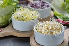 Ingredients for healthy salad. Raw fresh young organic sprouts o. Raw fresh young organic sprouts of leek, alfalfa, red reddish and carrot in bowls, green Stock Image