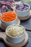 Ingredients for healthy salad. Raw fresh young organic sprouts o. Raw fresh young organic sprouts of leek, alfalfa, red reddish and carrot in bowls Stock Photography