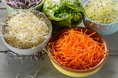 Ingredients for healthy salad. Raw fresh young organic sprouts o. Raw fresh young organic sprouts of leek, alfalfa, red reddish in bowls, carrot and green Stock Image