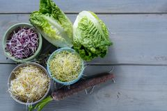 Ingredients for healthy salad. Raw fresh young organic sprouts o. Raw fresh young organic sprouts of leek, alfalfa, red reddish in bowls, carrot and green Stock Photos