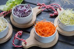 Ingredients for healthy salad. Raw fresh young organic sprouts o. Raw fresh young organic sprouts of leek, alfalfa, red reddish in bowls, carrot and green Royalty Free Stock Photos