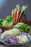 Ingredients for healthy salad. Raw fresh young organic sprouts o. Raw fresh young organic sprouts of leek, alfalfa, red reddish mixed on tin board Stock Image