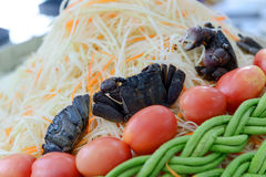 Ingredients for make papaya salad - som tam. Traditional of thai food. Select focus to salted crab royalty free stock photos