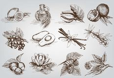 Ingredients for natural cosmetics royalty free illustration