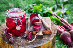 Ingredients for pickled beetroots in the jar Royalty Free Stock Images
