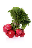 Ingredients: radishes. Bunch of fresh radishes isolated on white stock photography