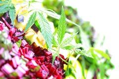 Ingredients for salad cannabis leaf hemp fresh beets sliced potatoes Royalty Free Stock Photos