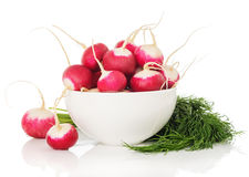 Ingredients for the salad of radishes. Fresh radishes, dill isolated on white background Royalty Free Stock Photos