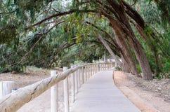 Ingresso fra gli alberi Fotografie Stock