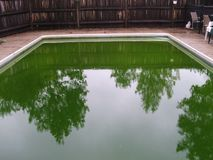 Inground水池绿藻类水 免版税库存照片