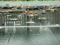 Inground basen z zbawczą pokrywą Zdjęcia Royalty Free
